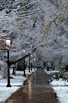 Just when you think campus can't get any more beautiful, snow falls.