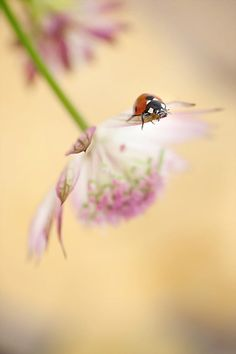 Spring lady by Mirka Wolfova