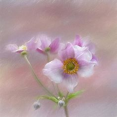 Pink Japanese Anenome by Gaille Gray 1000 Piece Jigsaw Puzzles, Poster Size Prints, Photo Puzzle, Photo Galleries, Greeting Cards, Japanese, Canvas Prints, Wall Art, Gallery