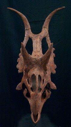 Diabloceratops skull >> from Dave Hone's Archosaur Musings