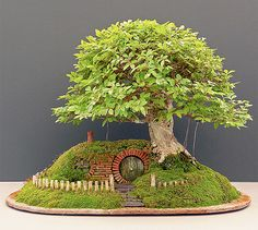 Unique bonsai tree with small house built into the side of a hill created by mechanical engineer and bonsai artist Chris Guise.