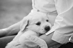 good idea:  kiss this puppy.