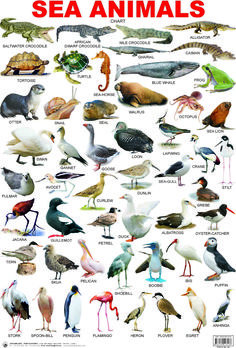 Resultado de imagen para list of sea animals