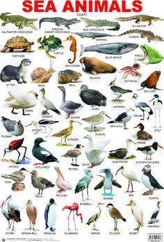 44-SEA ANIMALS.jpg (1305×1926)