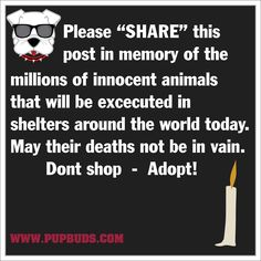 In Memory of..... So many loving and lonesome animals, so sad for them.                    <3