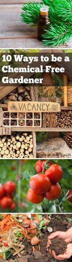 Chemical free gardening, gardening hacks, gardening 101, natural pest control, popular pin, pest control for your garden, gardening, gardening ideas, safe gardening