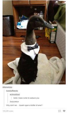 Seducktive Duck