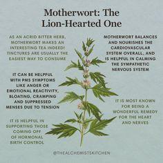 Magic Herbs, Herbal Magic, Healing Herbs, Medicinal Plants, Natural Health Remedies, Herbal Remedies, Natural Herbs, Natural Healing, Natural Medicine