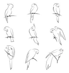 Parrot drawing for embroidery pattern