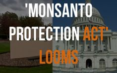 New 'Monsanto Protection Act' Gives Monsanto Power Over US Government    Read more: http://naturalsociety.com/new-monsanto-protection-act-gives-monsanto-power-over-us-government/#ixzz2NdJECuD4   Follow us: @naturalsociety on Twitter   NaturalSociety on Facebook