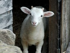 Will He Passover You? #easter #christian #faith #passover #blog #blogpost #lamb  #jesus