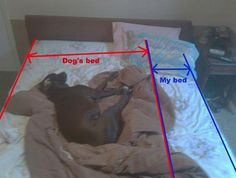 20 Things Dog Owners Will Understand - Once they sleep on your bed, they own it.