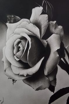 3d Art Drawing, Art Drawings Sketches, Tattoo Drawings, Rose Reference, Rosa Tattoo, Realistic Rose Tattoo, Chicano Art Tattoos, Rose Sleeve, Elegant Tattoos