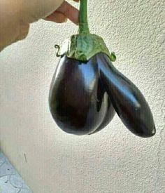Şeyhini hayal ederek ektiği tohumdan böyle ürün aldı.. İşte büyük keramet!! Rabıta patlıcanı... Hem yerli, hem de milli.. - Yalnız Gezegen - Google+