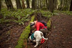 Alana McGee, of Seattle's Toil & Truffle, digs for a truffle sniffed out by her dog, Lolo, in the Cascade foothills Wednesday. Lolo is a young Lagotto Romagnolo, an Italian breed known for its truffle-hunting skills. Seattle Times.