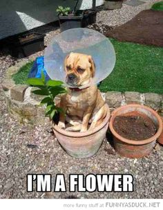 "Sometimes you have to stop and ""pet"" the flowers!"