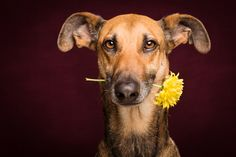 For you are beautiful by Elke Vogelsang, via 500px