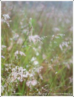 a wayside flower