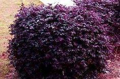 Top 10 Most Colorful Winter Landscape Plants by deana