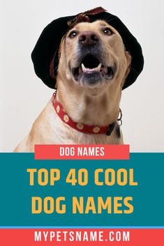 If you have a dog that has a lot of pizzazz, then you need a dog name that's equally hip. Hipster, stylish or hip, call it what you will, we have put together a list of coll dog names that'll ensure your dog stands out from the gang. Cool Pet Names, Best Dog Names, Best Dogs, Hipster Dog, How To Lean Out, Your Dog, Puppies, Cool Stuff, Stylish