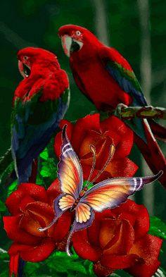 Very beautiful gif Flowers Gif, Beautiful Rose Flowers, Beautiful Flowers Wallpapers, Beautiful Butterflies, Beautiful Birds, Beautiful Love Pictures, Beautiful Gif, Love Images, Beau Gif