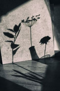 Light and shadow by Shuichi Machimoto