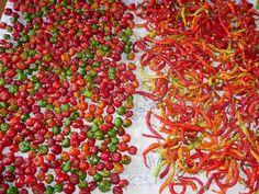 3_nakladani-kozi-rohy-feferonky-recepty Red Peppers