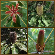 How to Grow Australian Native Plants
