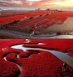 Red Beach – Panjin, China