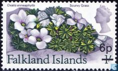 Postage Stamps - Falkland Islands - Native flowers