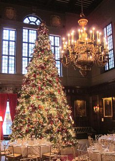 Cristhmas Tree Decorations Ideas : Christmas Tree at the Harvard Club NYC New York Christmas, Christmas Time Is Here, Noel Christmas, Winter Christmas, Christmas Lights, Holiday Ornaments, Christmas Wedding, Christmas Scenes, Beautiful Christmas Trees