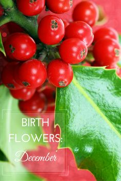 Flowers are a popular birthday gift, personalise it with the recipient's birth month flower. Take a look at the December birth flowers, narcissus and holly.