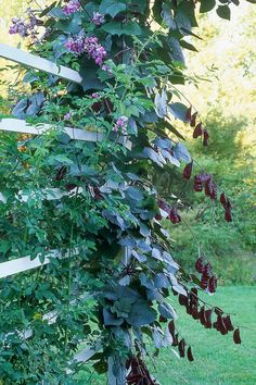 16 Fast-Growing Vines to Add to Your Yard This Season 12 Fast-Growing Flowering Vines - Best Wall Climbing Vines to Plant Climbing Plants Fast Growing, Climbing Flowering Vines, Fast Growing Flowers, Fast Growing Vines, Climbing Hydrangea, Climbing Vines, Climbing Flowers, Hydrangea Petiolaris, Gardens