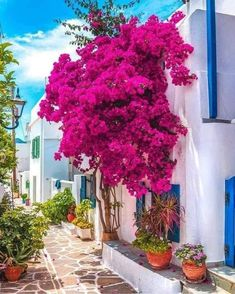 Good Day, Good Morning, The Good Place, Bougainvillea, Traditional Art, Home Art, Neon Signs, In This Moment, Places
