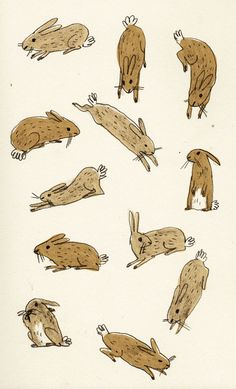 brionymaysmith:  Only had these on twitter before but I thought I'd load them on here. Rabbits!