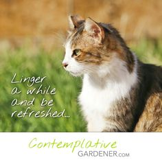Visit a soul-nourishing blog that combines a love of gardening with a love of contemplation.