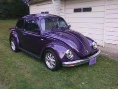 Purple Bug...