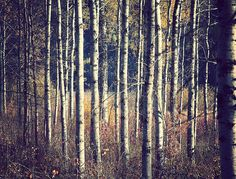 Bark-ode by Stephen Smith