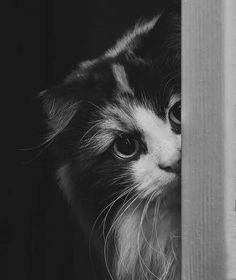 Bir semtin sokak hayvanları sizden kaçmıyorsa orada yaşayın. Çünkü komşularınız güzel insanlardır.