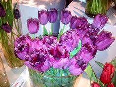 Curly Sue tulips