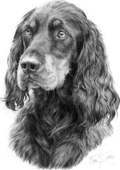 Gordon Setter by Mike Sibley ~ Graphite Pencil. Gordon Setter dog art portraits, photographs, information and just plain fun. Also see how artist Kline draws his 110 different dog breeds using only words at drawDOGS.com #drawDOGS He also can add your dog'