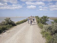 Cycling through the beautiful landscape of the Camargue, a nature reserve, in France. More at: http://www.dielandpartie.de/radreisen-provence-camargue-frankreich.html