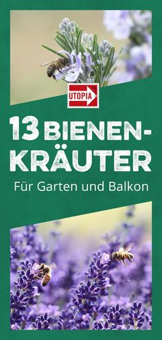 13 bienenfreundliche Kräuter für Garten und Balkon Bee-friendly plants for the garden and balcony: If you plant lavender, rosemary and oregano, you will do a great favor to the bees and insects. We show which other herbs make up a great bee pasture. Balcony Plants, Balcony Garden, Outdoor Plants, Garden Planters, Bee Friendly Plants, Garden Insects, Organic Gardening Tips, Herb Gardening, Pallets Garden