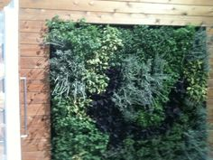 Plant walls like this one in the Miele booth were a show trend. It can be used indoors or outdoors at various levels. Pinned by Zahtz Dwell On Design, Sensory Rooms, Sensory Garden, Free Park, Plant Wall, Outdoor Fun, Parks, Outdoor Living, Gardens
