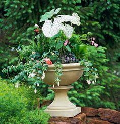 Shady container: -- Boston fern (Nephrolepis exaltata 'Bostoniensis')  -- Begonia 'NonStop Pink'  -- Fuchsia spp.  -- Caladium bicolor  -- Slipper orchid (Paphiopedilum callosum)  -- Bleeding heart (Dicentra spp.)  -- Maidenhair fern (Adiantum pedatum)  -- Elephant's ears (Bergenia spp.)  -- Labrador violet (Viola labradorica)  -- Bird's-foot violet (Viola pedata)