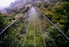 Puente en Monteverde
