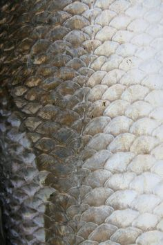 Fish Scale Textures - natural silver pearl surface pattern inspiration for design