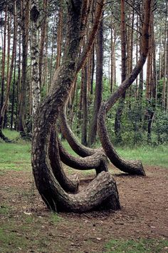 Posts about crooked forest written by Alyson Strike Crooked Forest, Tree Of Life, Poland, Trees, Europe, Travel, Tree Structure, Wood