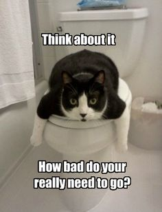 58 Best Cute And Funny Things Animals Or Saying Images Dog Cat