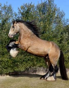 112 Best Horse Feathers Images Pretty Horses Big